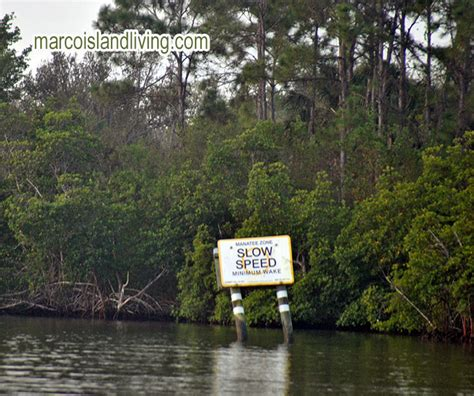 everglades boat tours marco island naples marco island fl manatee tours sightseeing nature