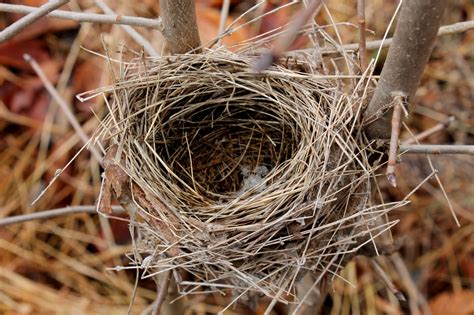 top 28 pictures of birds nests prairie story birds of