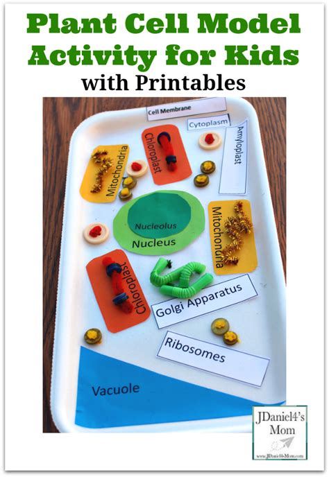 science activities for kids i am and for kids on pinterest plant cell model activity for kids with printables to use