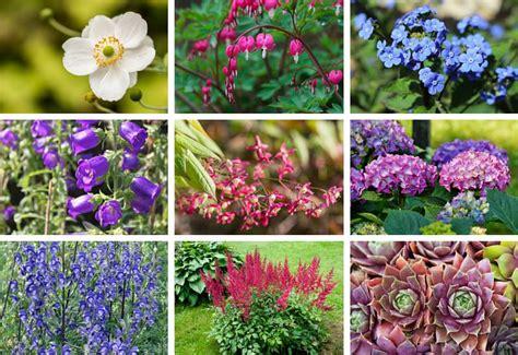 Blumen Stauden Halbschatten by 180 Perennials That Do Well In Shade A To Z