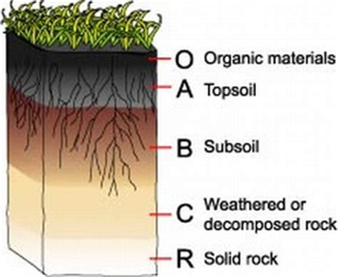 diagram of a soil profile plant a seed it grow improve your soil organically