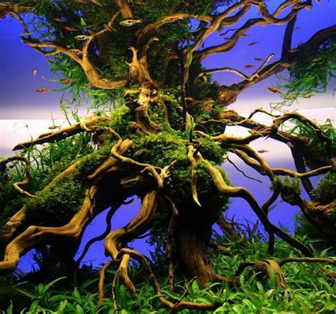 most beautiful aquascapes beautiful aquascaping photo collection quertime