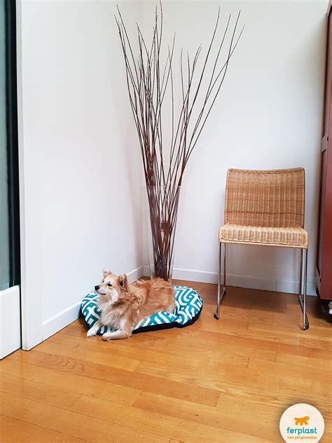 casa febus home design 11 photos home decor pembroke arredare il salotto in stile classico moderno love ferplast
