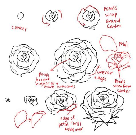how to draw doodle roses how to draw roses and peonies imgur drawing