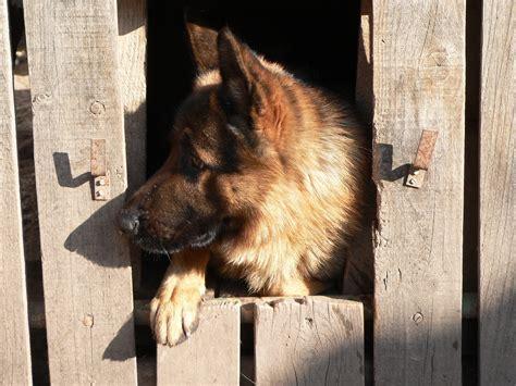 crate german shepherd puppy crate german shepherd puppy 4 simple how to steps