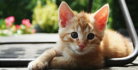 how to litter your how to re litter a cat how can a cat go without pooping information and