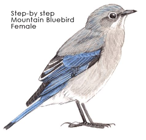 bluebird mountain f step by step john muir laws