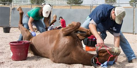 Field Goal Stand by A Second Chance At Life Veterinary Students Help Rescued