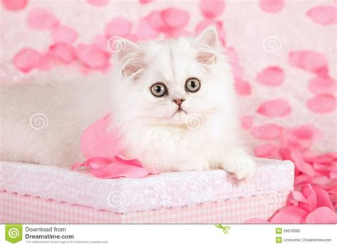 cats  pink images  pinterest
