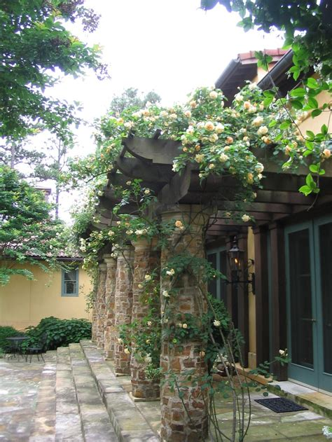 Backyard With Pergola Climbing Heritage Roses On An Entry Pergola With Rustic