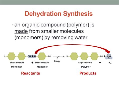 dehydration reaction what do the following equations represent ppt