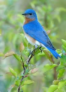 birds pictures nestwatch
