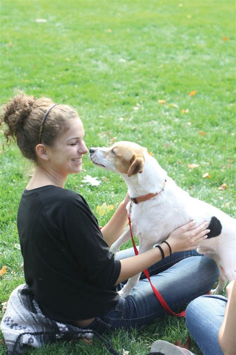 rent puppies for a rent a puppy news iowastatedaily