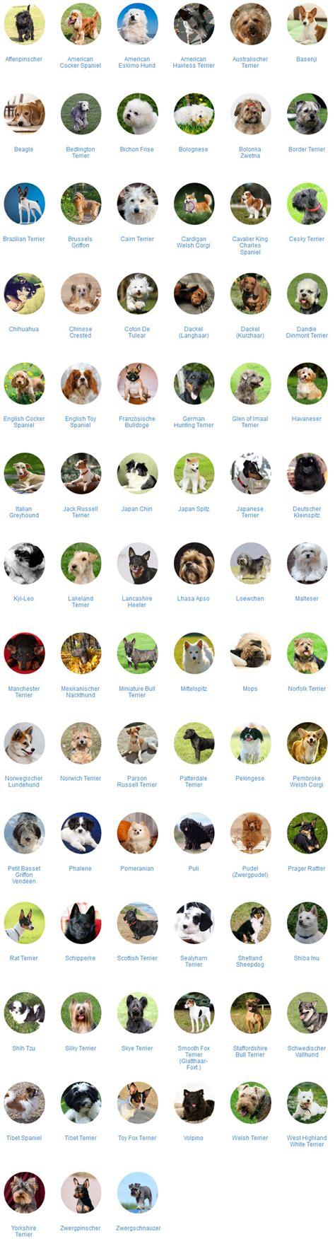 le mit namen alle kleine hunderassen mit bilder im 220 berblick