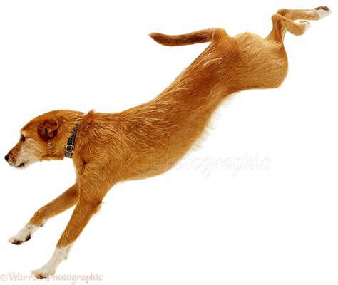 puppy cat jumping clipart collection