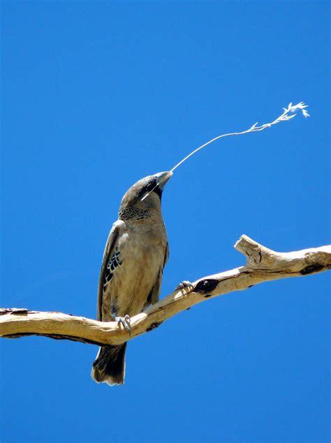 best birds of africa 08 oregon budget traveler