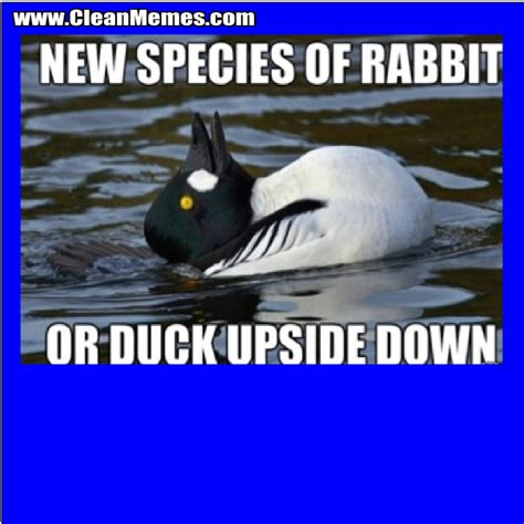 Silly Rabbit Meme - silly rabbit clean memes the best the most online memes