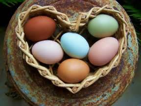 chickens that lay colored eggs sarasota cluck top 25 funky chicken facts
