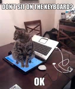 Cat Laptop Meme - cats hate laptops