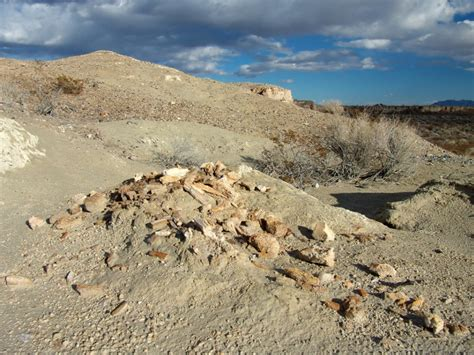 Tule Springs Fossil Beds by Juvenile Mammoth Bones In Tule Springs Fossil Beds