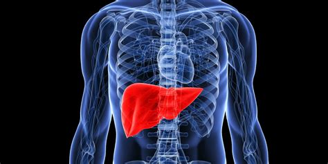Guardian Liver Detox by The Importance Of Detoxification And Why It Is Not A Myth
