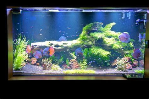 Led Aquarium Lighting Orphek Orphek Pr 72 Led
