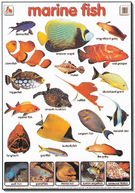 types of aquarium fish tropical fish types google search virtual aquarium pinterest tropical fish search and