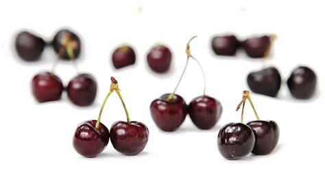 are cherries bad for dogs are apples for dogs 39 foods dogs can can t eat