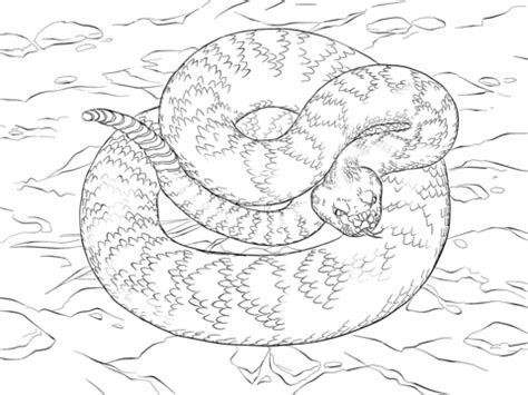 western diamondback rattlesnake coloring page coloring pages