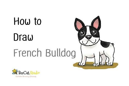 how to draw a cute english bulldog