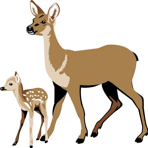 clip deer white tailed deer clipart clipground