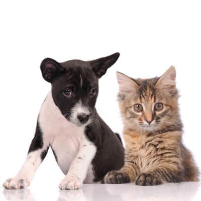 and cat hospital low cost spay neuter programs and cat hospital garden city park ny