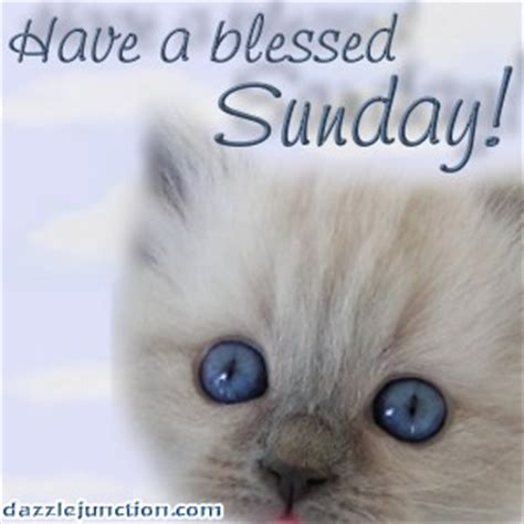 A Cat On A Sunday by Happy Sunday Quotes Cats Quotesgram