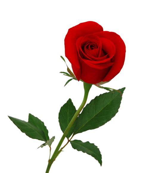 imagenes de rosas para una madre tres hermanos y una madre diario de un karma familiar i