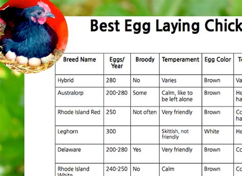 Backyard Chickens Chart Backyard Chickens Chart 28 Images Chicken Breed Chart