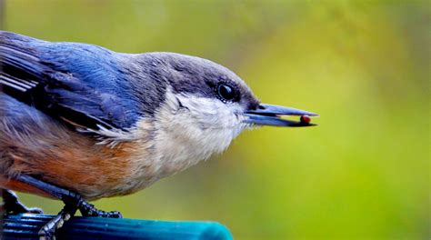 attracting bluebirds to your backyard 4 ways to attract more birds to your backyard this winter