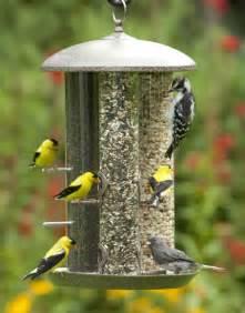 bird feeders general information
