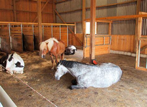 pferde stall hof gut knecht pferdepension reitstall ferien auf dem