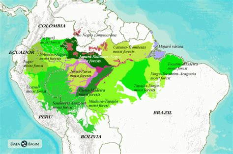 amazon basin amazon basin map www pixshark com images galleries
