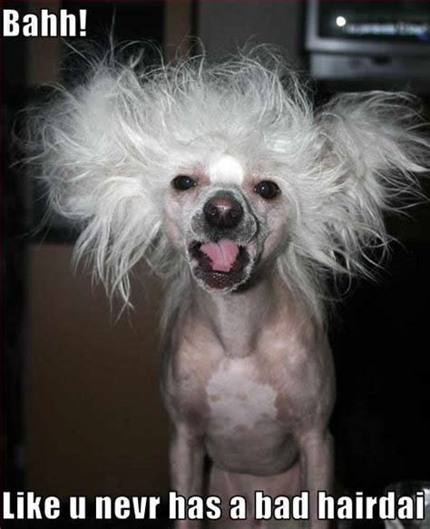 bad puppies bad hair day dogs photo 11883936 fanpop