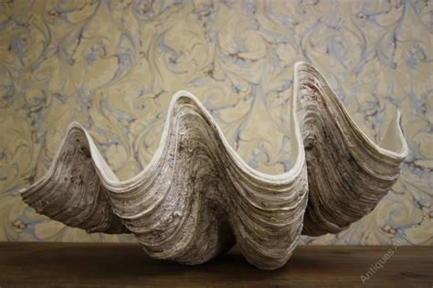 Large Decorative Clam Shell antiques atlas decorative clam shell