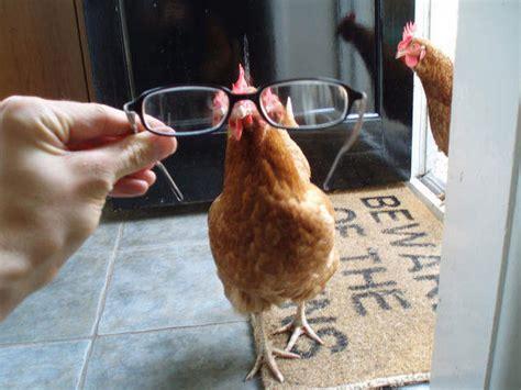 Chicken Doormat by Beware Of The Chickens Doormat This Week S Favourites
