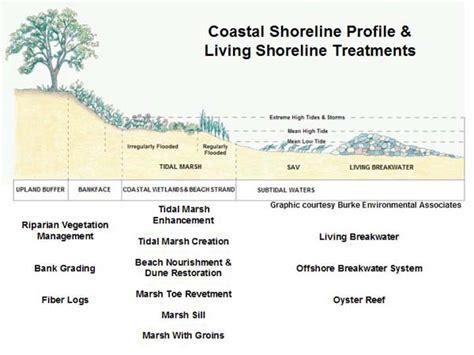 sand dune cross section living shorelines