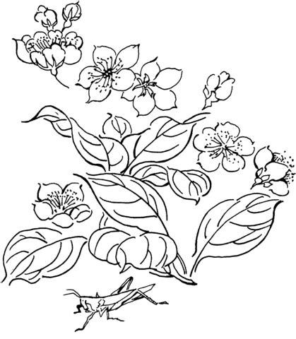 super advanced coloring pages v 228 rityskuva kukkia