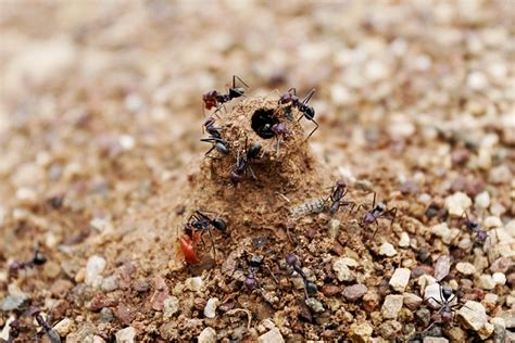 how do you get rid of ants in the house getridof com how to get rid of anything
