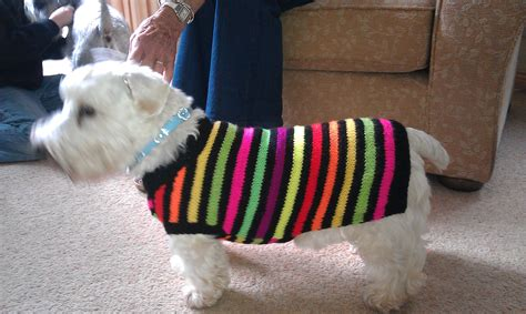 knitting pattern for dog coats uk rocky hand knitted coat