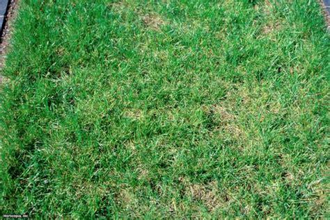 how to plant winter grass winter grass hgtv