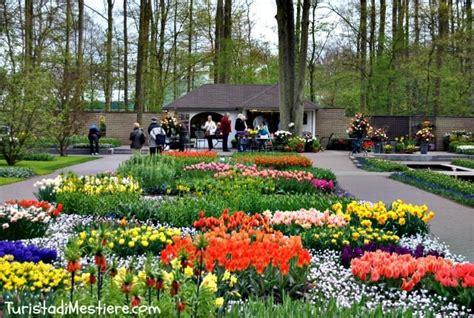 giardini olandesi keukenhof 2015 il parco olandese omaggia gogh