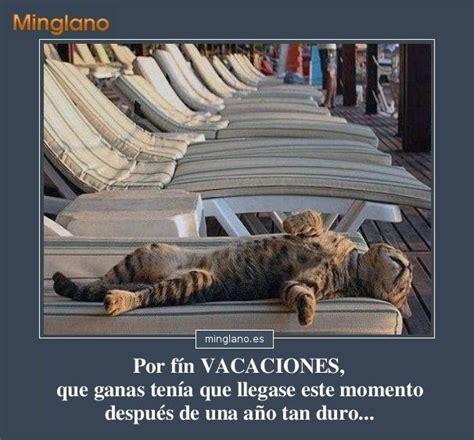 imagenes despues de unas vacaciones im 193 genes de gatos con frases divertidas