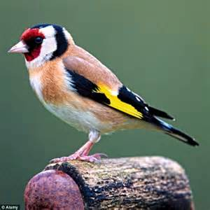 top 28 what do birds eat besides bird seed how to feed